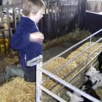 boydells-farm_01