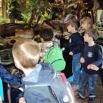 Zoo 181